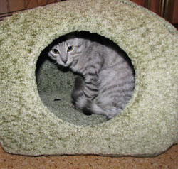 Домики для котенка своими руками